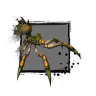 Junge Waldspinne Icon.png