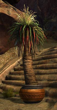 palme im topf guild wars 2 wiki
