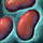 Kidneybohne Icon.png