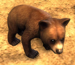 Wars Bären mini bären junges guild wars 2 wiki